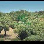 Video istituzionale Amorim sulla filera del sughero espanso CORKPAN