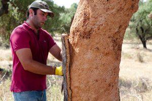 Il sughero deriva dalla corteggia della quercia suberis