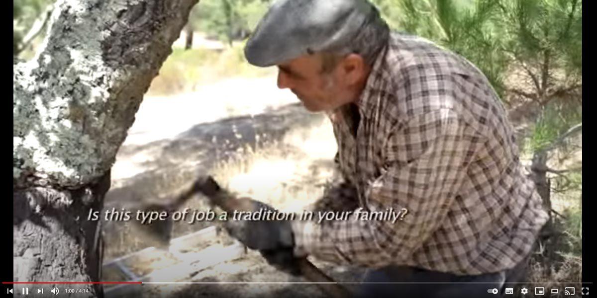 Video della decortica del sughero in portogallo
