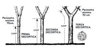Schema di decortica delll quercia da sughero