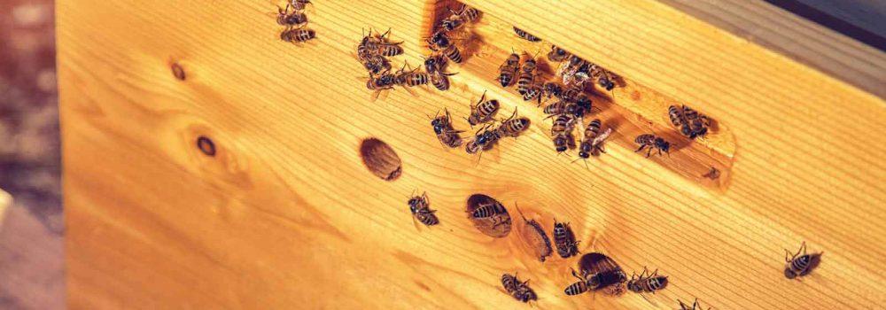 Le arnie BeeAtHome di fatevobees sono realizzate in legno e isolate con sughero espansoCorkpan