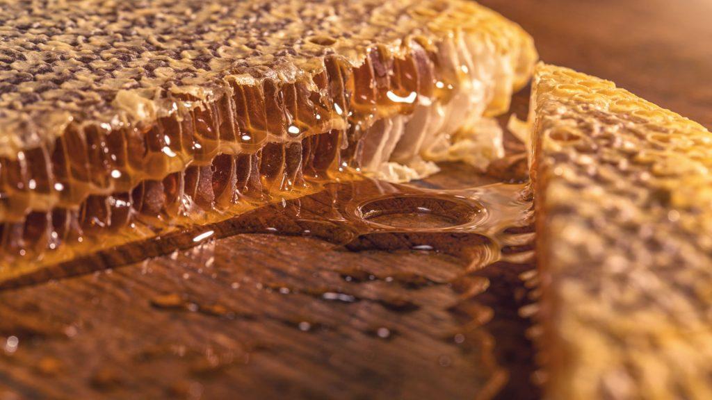 il-gusto-fatevobees-miele-in-favo-apicoltori-pino-fattori-1024x576.jpg
